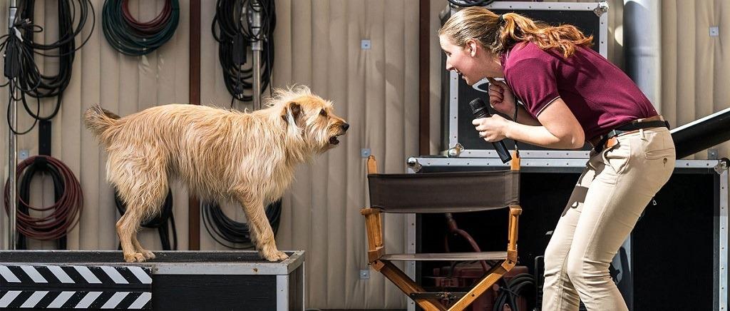洛杉矶好莱坞环球影城 环球影城动物演员